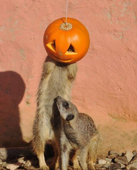 Happy Halloween Kiddos